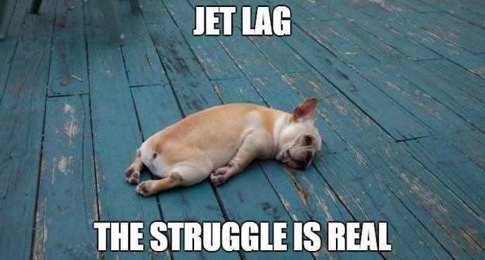jet-lag-tired-dog-1